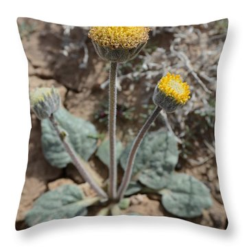Throw Pillow featuring the photograph Rayless Daisy by Jenessa Rahn