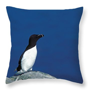 Razor-billed Auk Alca Torda Throw Pillow