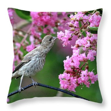 Reach For It Throw Pillow