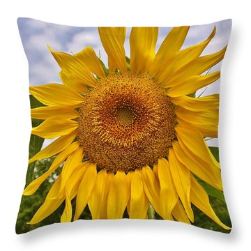 Reaching For The Sky Throw Pillow by Bruce Bley