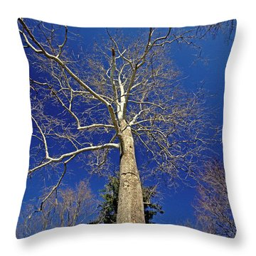 Throw Pillow featuring the photograph Reaching For The Sky by Suzanne Stout