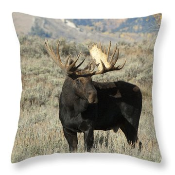Ready And Waiting Throw Pillow by Sandra Bronstein