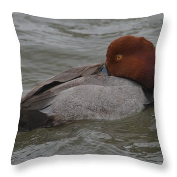 Ready For A Nap Throw Pillow by Dan Williams