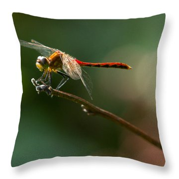 Ready For Flight Throw Pillow