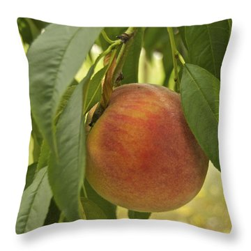 Ready For Picking 2904 Throw Pillow by Michael Peychich
