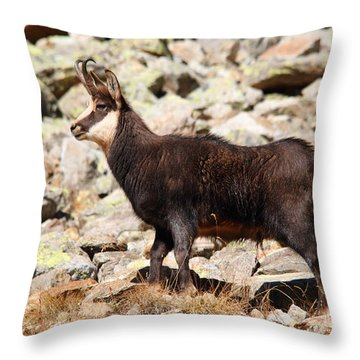 Throw Pillow featuring the photograph Ready For The Challenge by Richard Patmore