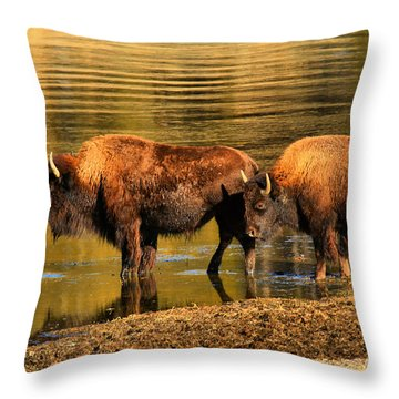 Throw Pillow featuring the photograph Ready To Cross The Yellowstone by Adam Jewell