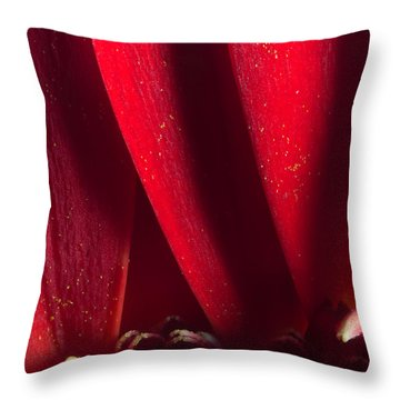 Golden Pollen Red Chrysanthemum Throw Pillow