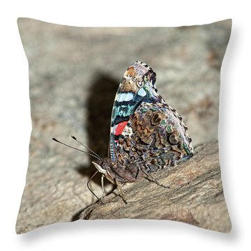 Throw Pillow featuring the photograph Red Admiral Butterfly by Lara Ellis