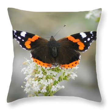 Red Admiral Feeding Throw Pillow