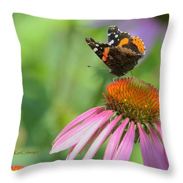 Red Admiral On Cone Flower Throw Pillow