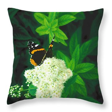 Red Admiral On Spirea Throw Pillow
