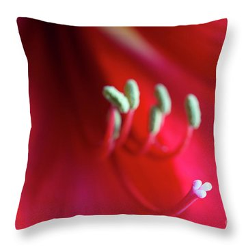 Throw Pillow featuring the photograph Red Amarylis by Elena Nosyreva