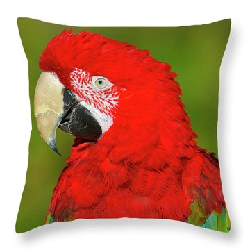 Throw Pillow featuring the photograph Red And Green by Tony Beck