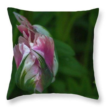 Throw Pillow featuring the photograph Red And White Bud 1 by Timothy Latta