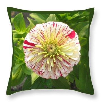 Red And White Flower Throw Pillow