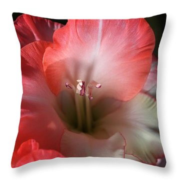 Red And White Gladiolus Flower Throw Pillow