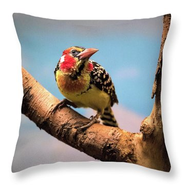 Red And Yellow Barbet Throw Pillow