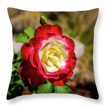 Red And Yellow Rose Throw Pillow