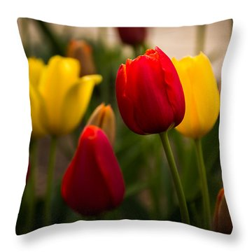 Red And Yellow Tulips Throw Pillow by Jay Stockhaus