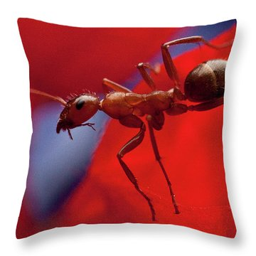Throw Pillow featuring the photograph Red Ant Macro by Jeff Folger