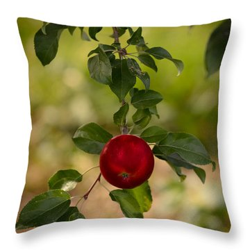 Red Apple Ready For Picking Throw Pillow