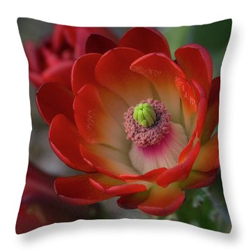 Throw Pillow featuring the photograph Red Beauty  by Saija Lehtonen