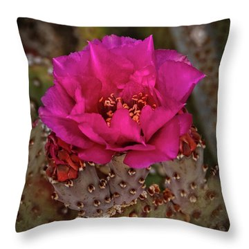 Throw Pillow featuring the photograph Red Beavertail Cactus Bloom by Robert Bales