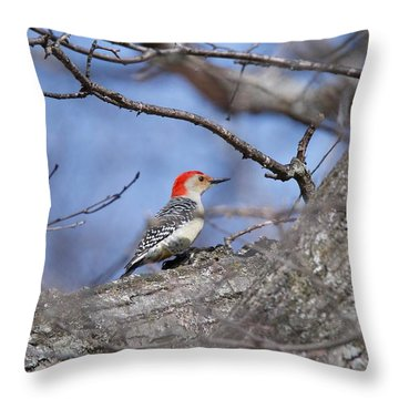 Red-bellied Woodpecker 1134 Throw Pillow by Michael Peychich