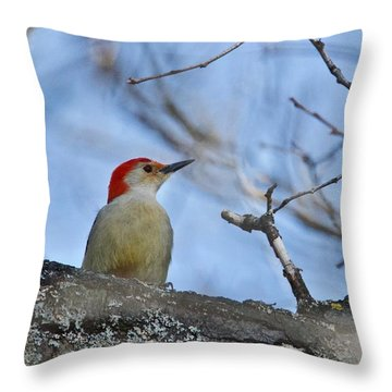Red-bellied Woodpecker 1137 Throw Pillow by Michael Peychich