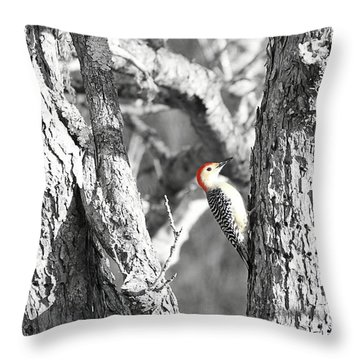 Throw Pillow featuring the photograph Red-bellied Woodpecker by Benanne Stiens