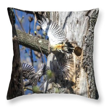 Red Bellied Woodpecker Chasing An Attacking Starling Throw Pillow