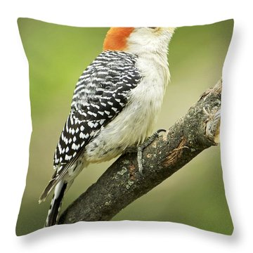 Red Bellied Woodpecker, Female On Tree Branch Throw Pillow