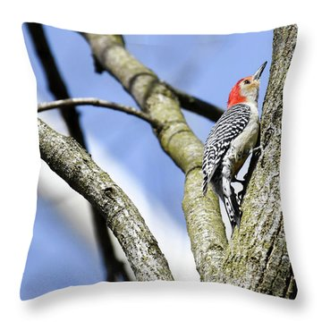 Throw Pillow featuring the photograph Red-bellied Woodpecker by Gary Wightman