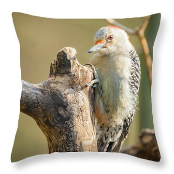 Red Bellied Woodpecker Img 7 Throw Pillow
