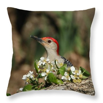 Red-bellied Woodpecker In Spring Throw Pillow by Sheila Brown