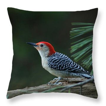 Red-bellied Woodpecker In The Pines Throw Pillow
