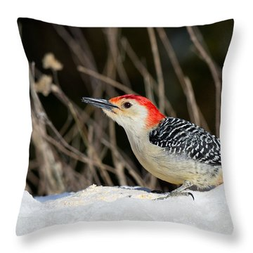 Throw Pillow featuring the photograph Red-bellied Woodpecker In The Snow by Angel Cher