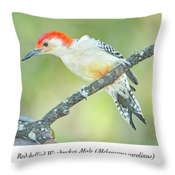 Red Bellied Woodpecker, Male Throw Pillow
