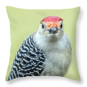 Red Bellied Woodpecker Portrait Throw Pillow