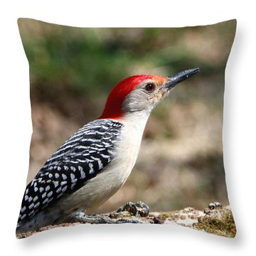 Red-bellied Woodpecker Throw Pillow by Sheila Brown