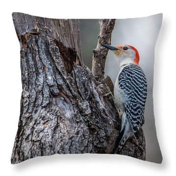 Throw Pillow featuring the photograph Red Bellied Woody by Paul Freidlund