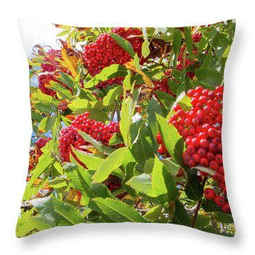 Red Berries, Blue Skies Throw Pillow