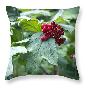 Red Berries Throw Pillow by Helga Novelli