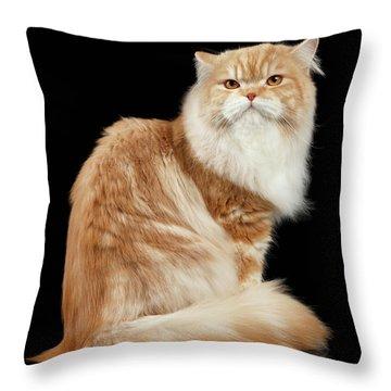 Persian Cat Throw Pillows