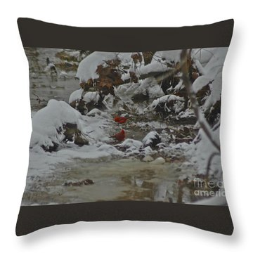 Red Bird Red Bird Throw Pillow