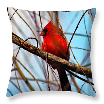 Red Bird Sitting Patiently Throw Pillow