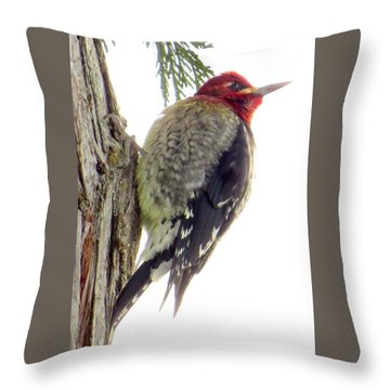 Red-breasted Sapsucker Throw Pillow