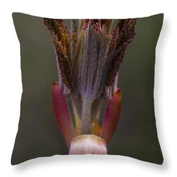 Red Buckeye Leaves Emerging Throw Pillow