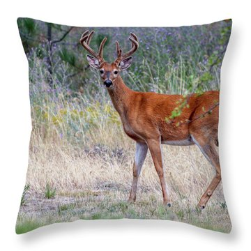 Throw Pillow featuring the photograph Red Bucks 1 by Antonio Romero